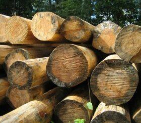 признаки некачественной древесины