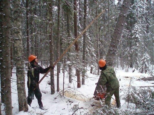 Эко-тех заготовка леса